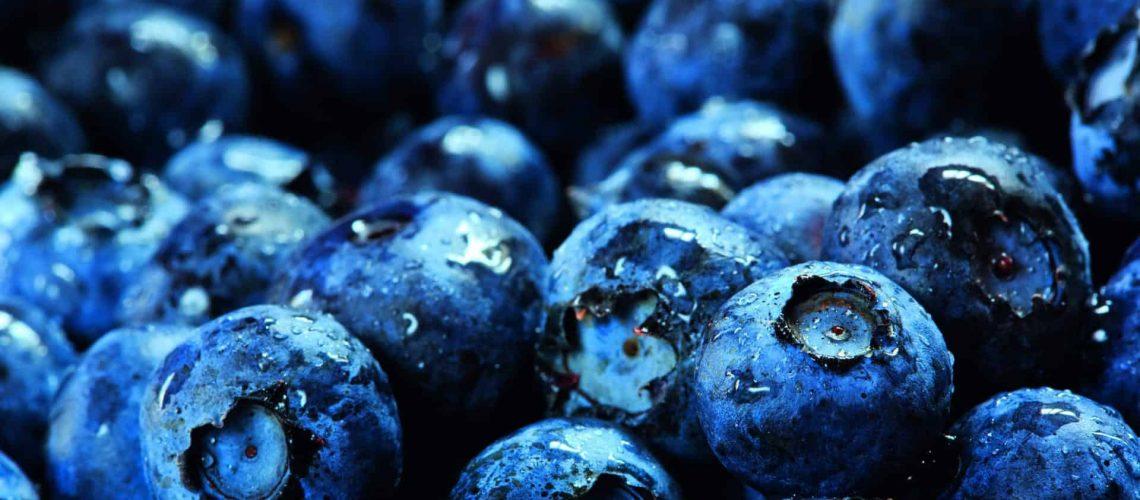 Blueberries_shutterstock_146861537_CMYK 300dpi