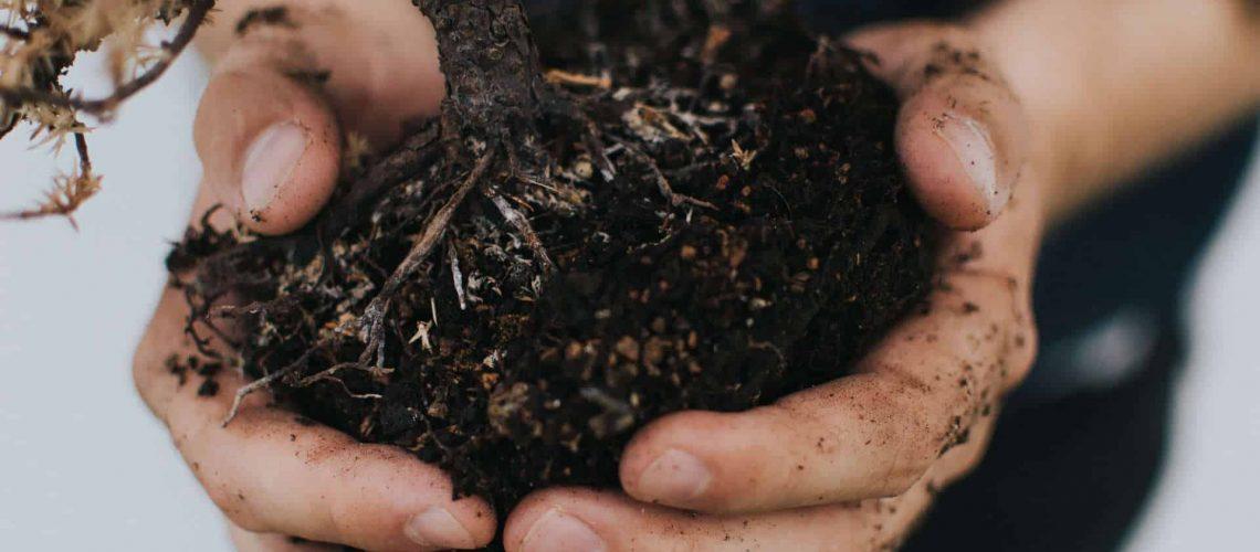 Soil Roots_01_RGB 72dpi
