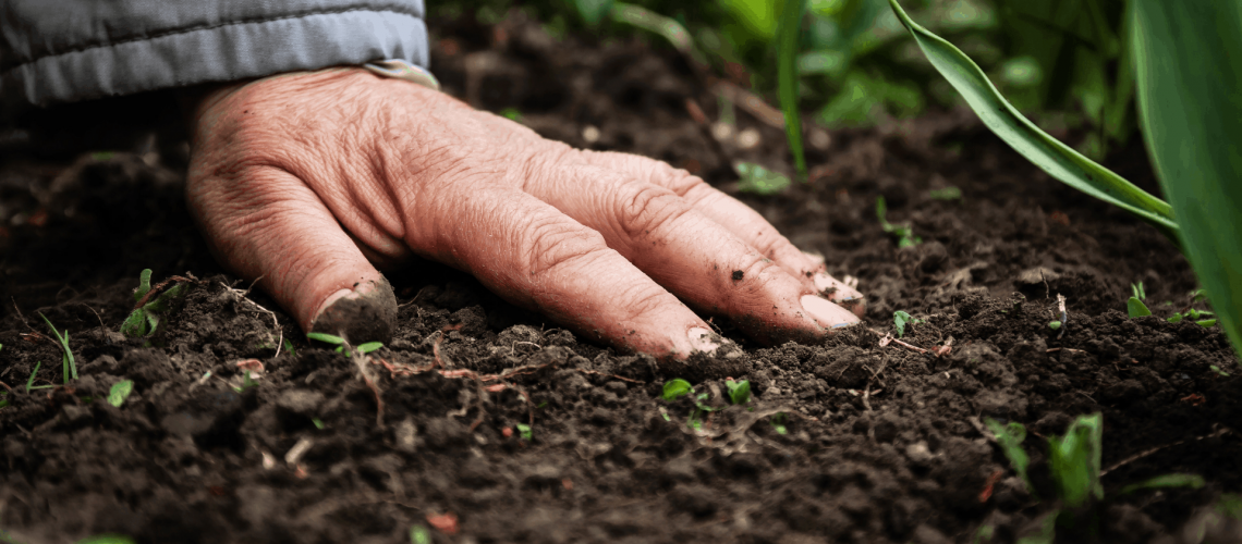 soil-and-hand